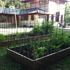 Build a deer proof fence and grow your herbs, veggies, berries and flowers in your yard.