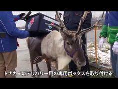 Giappone, la renna distribuisce le pizze - Infinity News