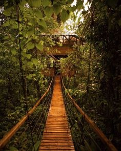 Follow your heart…and sometimes a bridge to a treehouse. This treehouse village in Costa Rica was built lovingly by a couple from Colorado. #wanderlust #treehouse #treesleeping #nature #tree #treehouses #glamping #green #architecture #tinyhome...