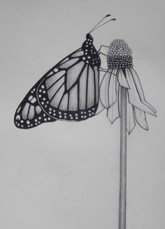 flower pencil drawings - Google Search