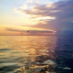 Morning birds #Florida