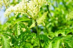 How to Get Rid of Aphids on Plants - Blooming Anomaly Aphids On Plants, Get Rid Of Aphids, Gardening Gloves, Garden Pests, Gardening Supplies, How To Show Love, Small Trees, Hibiscus Flowers, Zinnias