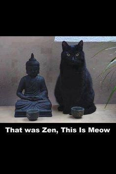 That was Zen, this is Meow Super Cute Animals, Domestic Cat, Cat Love, Beautiful Cats, Cool Cats, Dog Ages, Cats And Kittens, Kitty Cats, Photographs