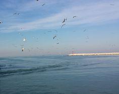 gabbiani seagulls