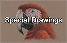 Learn how to draw a duck with this how-to video and step-by-step drawing instructions. A new animal drawing tutorial is uploaded every Tuesday. What To Draw, Learn To Draw, Animal Drawings, Cool Drawings, Drawing Tutorials For Beginners, Popular Cartoons, Shih Tzu Dog, Maine Coon Cats, Drawing Lessons