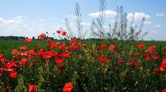 maki, meadow, grass - http://www.wallpapers4u.org/maki-meadow-grass/