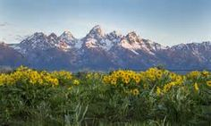 jackson hole wyoming photos - Yahoo Image Search Results