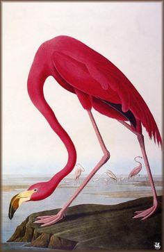 26 апреля 1785 года родился Джон Джеймс Одюбон, американский орнитолог и художник-анималист. В декабре 2010 года на аукционе «Сотбис» экземпляр его книги «Птиц Америки» из собрания лорда Хескета ушёл с молотка за 11,5 миллионов долларов, что сделало его самой дорогой книгой в мире. Галерея Одюбона - в Артхиве.