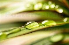 Edith Albuschat - Tropfen auf einem grünen Blatt