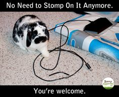 Bunny chewed the cable of our Dance Dance Revolution Pads. We turned him into a funny meme. I think we're even.