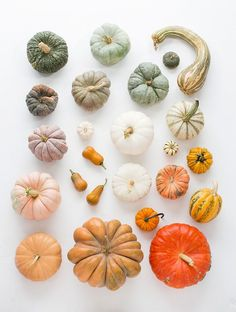 pumpkins and gourds http://www.100layercake.com/blog/2014/10/23/heirloom-pumpkin-varieties-fall/?utm_content=bufferefd20&utm_medium=social&utm_source=pinterest.com&utm_campaign=buffer#_a5y_p=4397803