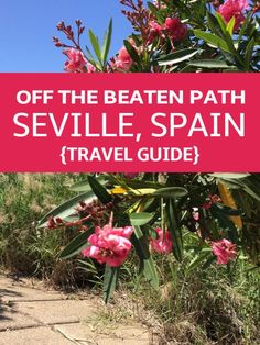 Here's a guide to getting to know the authentic side of Seville! devoursevillefoodtours.com
