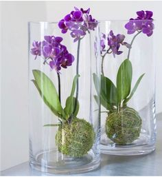 Indoor Gardens For Your Home - 25 Beautiful Ideas for Making Terrariums – 25 Beautiful Ideas for Making Terrariums – - Orchid Terrarium, Orchid Planters, Indoor Orchids, Orchids Garden, Diy Gardening, Orquideas Cymbidium, Orchid Flower Arrangements, Growing Orchids, Decoration Plante