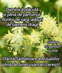 Herbs, Facebook, Herb, Medicinal Plants