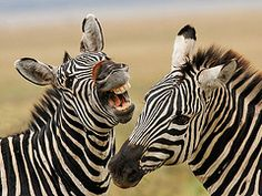 """Frank, that's a good one. Are we black with white stripes or are we white with black stripes. You crack me up."""