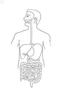 digestive system diagram draw it neat : how to draw human