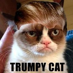 Iconic. | People Are Giving Their Cats Donald Trump Hairstyles: An Instagram account called @TrumpYourCat has seized the moment by encouraging people to craft fur toupees for their cats resembling Trump's iconic comb-over.