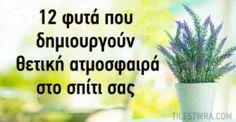 Αν και τα φυτά χρησιμοποιούνται συνήθως για να διακοσμήσουν το σπίτι και το γραφείο ή να ομορφύνουν μια αυλή ή έναν κήπο, πολλά φυτά μπορούν να βελτιώσουν