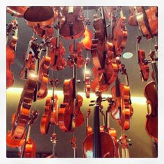 Violins hanging in the light. Display of violins.