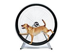 Dog exercise wheel! Because lets face it.. you are THAT lazy.     I want one! lol