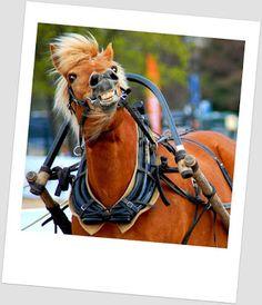 Portfolio Multimedeia Ex Libris, Helsinki, Multimedia, Pony, Horses, Animals, Pony Horse, Animales, Animaux