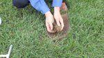 Soil Sample Instruction Video - MU Extension in St. Louis on Vimeo