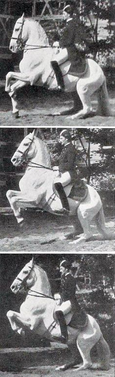 Bereiter Lippert (c. conducting a riding study of the levade, including the low levade ( and the high levade ( Horse Photos, Horse Pictures, Lippizaner, Lipizzan, Spanish Riding School, Horse Facts, All About Horses, Dressage Horses, Vintage Horse