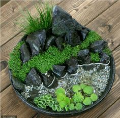 Need Japanese Garden Ideas? A lot of people have taken an interest in Japanese gardening, in recent times. Like any other pastime, gardening is a hobby that is enjoyed more when you have received the proper infor Bonsai Garden, Succulents Garden, Garden Plants, Mini Terrarium, Terrarium Plants, Water Terrarium, Indoor Water Garden, Indoor Plants, Jardin Zen Miniature