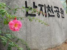 [Today's Photo] 꽃송이가 X10  사진찍기 좋은 난지천 공원에서 담은 꽃송이네요.   어제는 서울 일부에 눈이 올 만큼 날씨가 추워졌는데요.   다가오는 겨울 알록달록 아름다운 꽃은 없지만  하늘에서 내리는 꽃, 설경을 담아보는 건 어떨까요?    <사진정보>    조리개값: F/9  노출시간: 1/320초  ISO감도: ISO-400  초점거리: 15mm