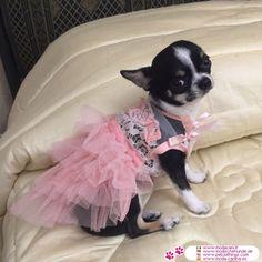Rosa Kleid für Hochzeiten für Chihuahua und kleine Hunde #Hunde #Chihuahua - Rosa Kleid für Hochzeiten für kleine Hunde (Chihuahua, Zwergpudel, Pudel, Maltesisch,...) sehr chic, mit Spitzen auf dem Mieder und zerzauste Tüllrock