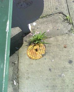 pineapple street art. I can't ever think of Pineapples in the same way now!! Thank you so much!!!
