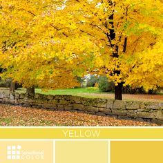 Yellow | Inspiration for Art and Design: Palettes Featuring the Color #Yellow