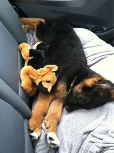 This little puppy cuddled with his mini-me: