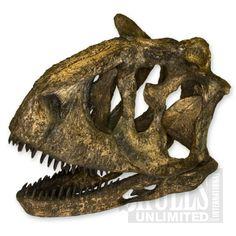 http://www.skullsunlimited.com/record_variant.php?id=4847 Carnotaurus Skull