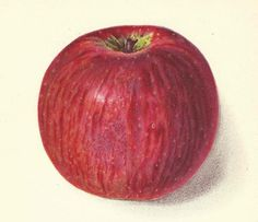 1912 Antique Apple Print Lithograph Book Plate Original Monocacy Apple by catladycollectibles on Etsy
