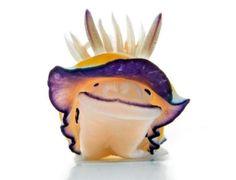 """Esta colorida lesma do mar chamada de """"Felimida britoi"""" parece estar sorrindo para você, mas pode ser tóxica. O molusco gastrópode marinho da família Chromodorididae foi descoberto em 1983 por Ortea & Pérez"""