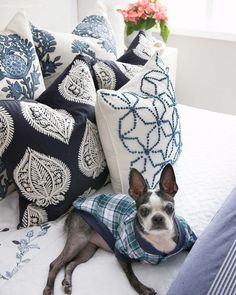 Style And Design Your Individual Enterprise Playing Cards In The Home Not Sure Which I Love More - The Blue And White Pillows Or The Plaid Dog Pjs Small Pillows, Down Pillows, Throw Pillows, Guest Room Paint, Pre Lit Wreath, Blue And White Pillows, Organic Cotton Sheets, Driven By Decor, Christmas Home