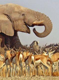 African Animals  by David Attenborough Africa photos