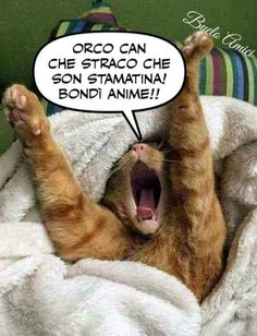 Epic Fail, Me Too Meme, Cristiani, Anime, Lol, Memes, Cats, Frases, Italia