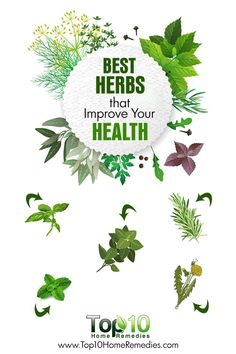 10 Best Herbs that Improve Your Health