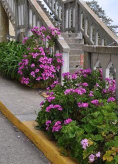 More of the Alcatraz gardens