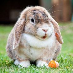 Cuidados del conejo