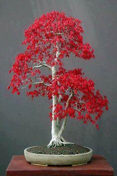 Terrarium Plants, Bonsai Plants, Bonsai Garden, Bonsai Trees, Bonsai Tree Types, Indoor Bonsai Tree, House Plants Decor, Plant Decor, Unusual Flowers