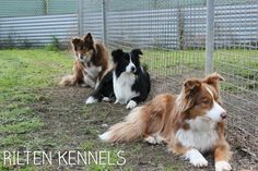 We provide first class quality pet boarding for dogs and cats in Yarrambat and Closest to Doreen, Diamond Creek, Eltham, Whittlesea and Melbourne northern. Pet Boarding, First Class, Melbourne, Dog Cat, Corgi, Vacation, Pets, Don't Worry, Animals