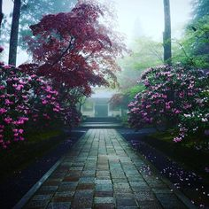kongobuji #高野山 #金剛峯寺 #霧 #しゃくなげ #霊宝館 #石楠花 #koyasan #kongobuji #reihokan #museum #rhododendron #foggy  2017/05/13 16:49:51