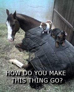 Dogs & Horse