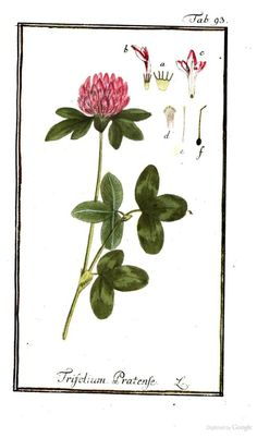 1779 - Icones plantarum medicinalium by Zorn, Johannes, 1739-1799