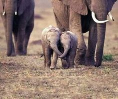Two friends holding trunks