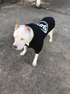 Rednose Gator Pitbull bloodline  This is the bloodline my