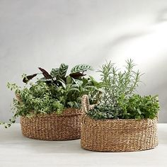 Our seagrass basket adds rustic charm to any home. The round basket is perfect for your kitchen, conservatory or dining space. Hand-woven in Vietnam from natural seagrass, each piece is unique with the use of natural materials. We also love this basket Home Yoga Room, Plant Basket, Storage Baskets, Laundry Storage, Round Basket, Garden Equipment, Plastic Pots, The White Company, Basket Decoration